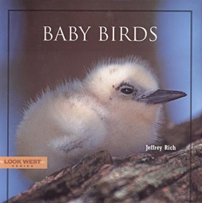 Look West: Baby Birds