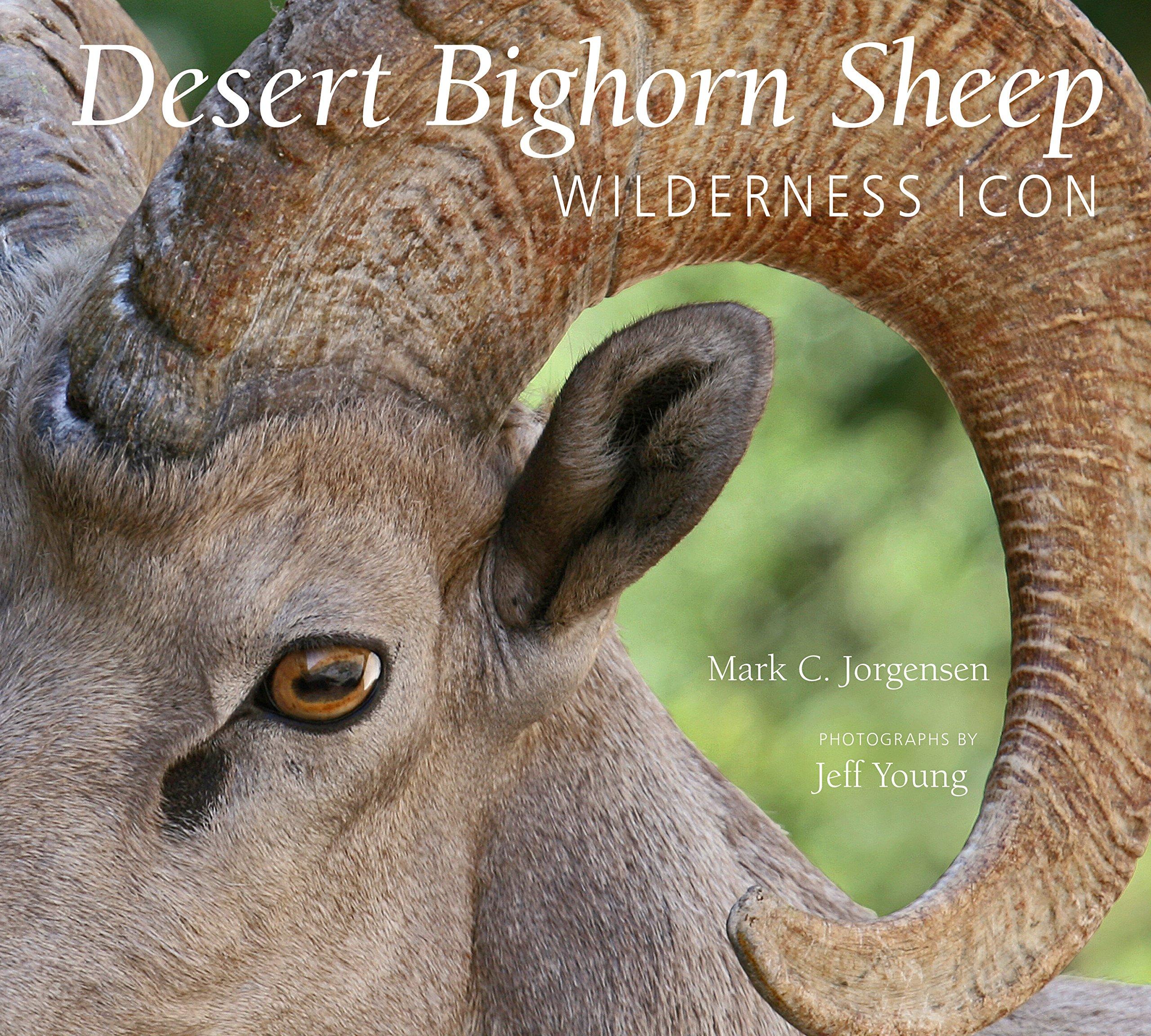 Desert Bighorn Sheep: Wilderness Icon