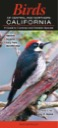 Birds of Central & Northern California: A Guide to Common & Notable Species